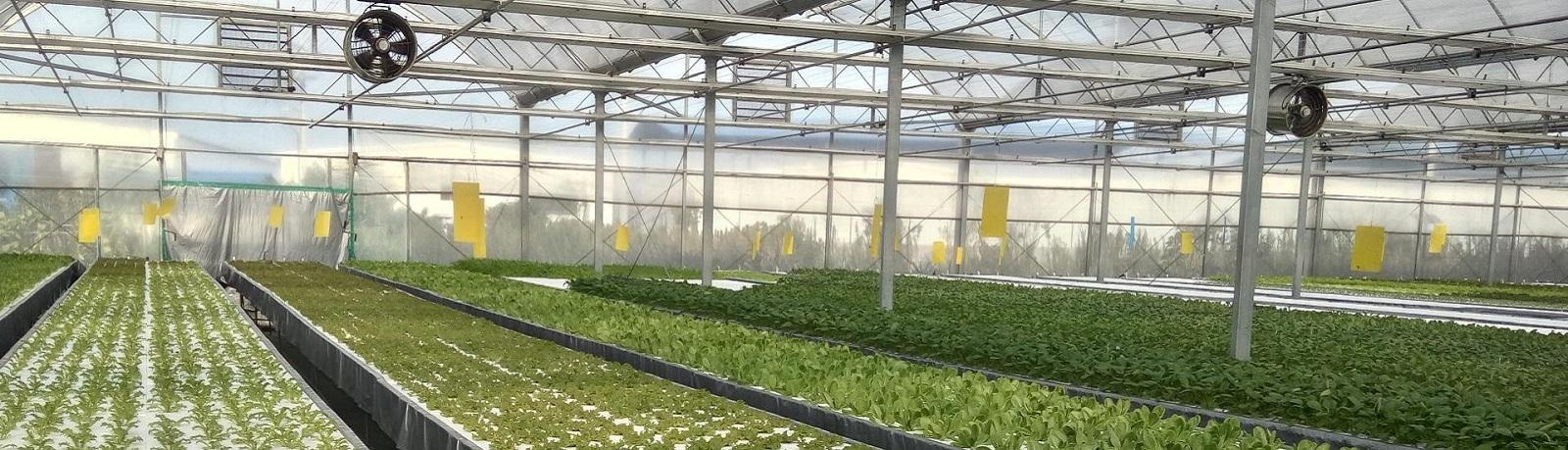蔬菜大棚建设 蔬菜大棚升级水培种植 温室工程 水肥一体化工程 全套温室大棚配件批发